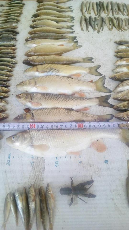 угинула риба и зидарски метар ради прегледа величине